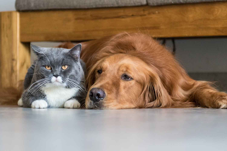 Veterinary Services in St Kilda & Mornington